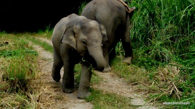 How cute is this baby elephant we saw from a nearby breeding center