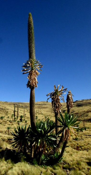 Beautiful vegetation on the trek